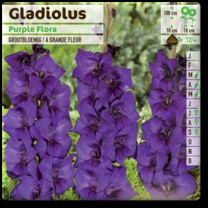 GLAIEUL Purple Flora